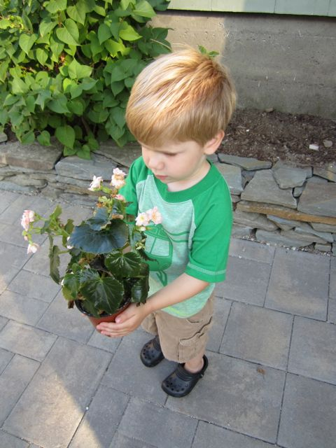 Colton with Begonia